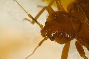 Bed Bug Control In Hospitals
